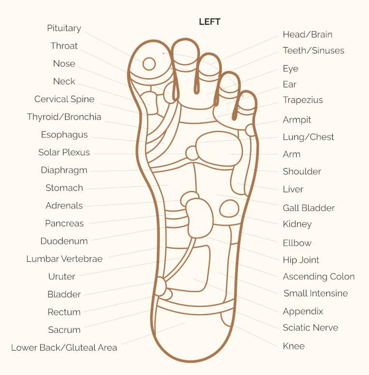 left foot reflexology chart